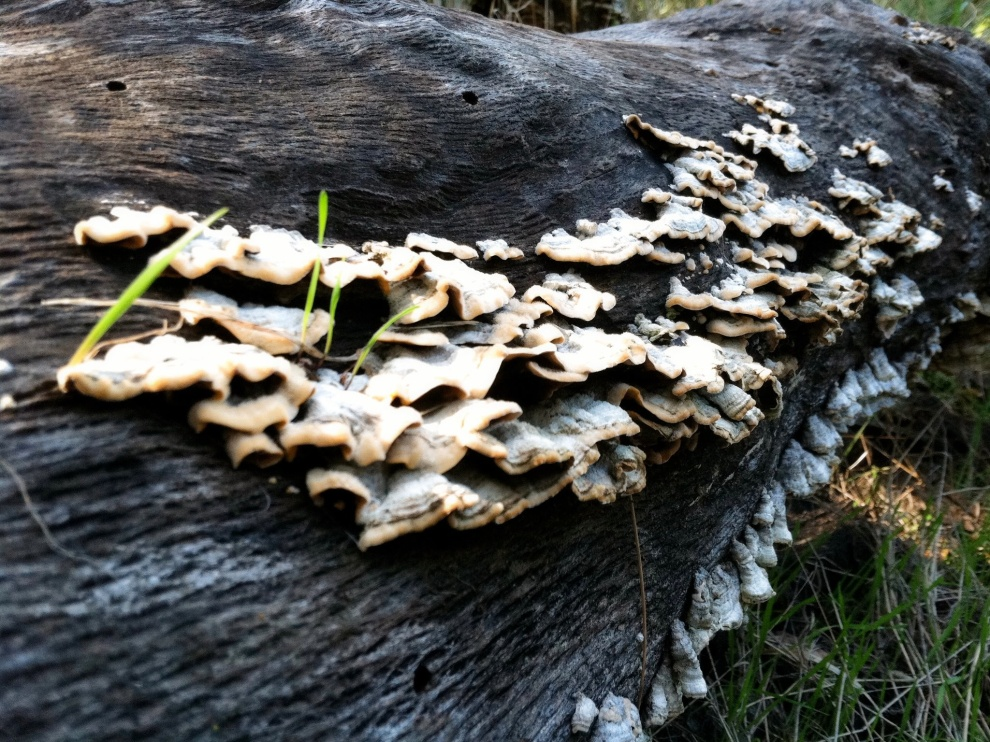 Mission Trails Fungi